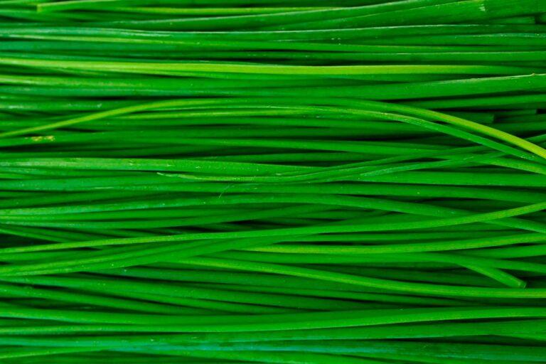 Linija zelenih izdelkov